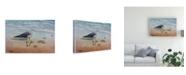 "Trademark Global Patrick Sullivan 1 Seagull Canvas Art - 27"" x 33.5"""