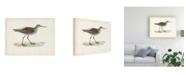 "Trademark Global Morris Morris Sandpiper V Canvas Art - 19.5"" x 26"""