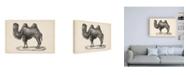 """Trademark Global Brodtmann Brodtmann Camel Canvas Art - 36.5"""" x 48"""""""