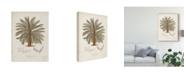 "Trademark Global Elizabeth Twining Antique Tropical Palm I Canvas Art - 20"" x 25"""