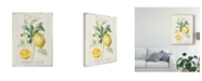 "Trademark Global Danhui Nai Floursack Lemon IV Canvas Art - 20"" x 25"""