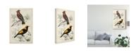 "Trademark Global M. Charles D'Orbigny D'Orbigny Birds V Canvas Art - 20"" x 25"""