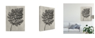 "Trademark Global Karl Blossfeldt Ua Ch Blossfeldt Botanical III Canvas Art - 15"" x 20"""