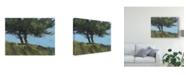 "Trademark Global Paul Bailey Hawthorne Duo Canvas Art - 20"" x 25"""