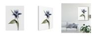 "Trademark Global Judy Stalus Xray Tulip VII Canvas Art - 20"" x 25"""