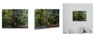 "Trademark Global Pierre Leclerc Angel Oak Charleston Floating Brushed Aluminum Art - 22"" x 25"""