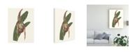 "Trademark Global Melissa Wang Orchid Display IV Canvas Art - 20"" x 25"""