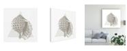 "Trademark Global Wild Apple Portfolio Conchology Sketches III Canvas Art - 15"" x 20"""