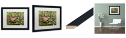 "Trademark Global Jason Shaffer 'Box Turtle' Matted Framed Art - 20"" x 16"""