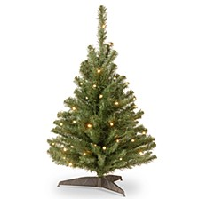 National Tree 3' Kincaid Spruce Tree with 100 Clear Lights