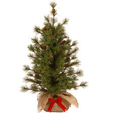 National Tree Company 3' Bristle Cone Pine Tree in Burlap Base with 44 Cones & Red Bow