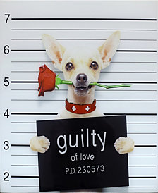 Guilty Chihuahua