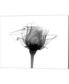 Rose #10 Xray By Bert Myers Canvas Art