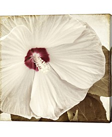 Alabaster Hibiscus By Mindy Sommers Canvas Art