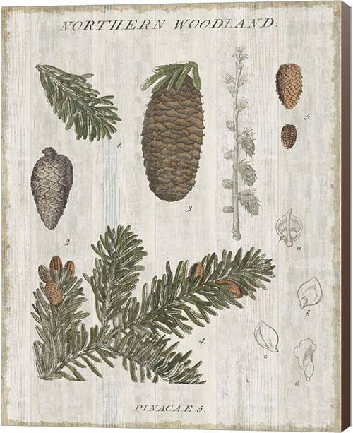 Metaverse Woodland Chart Iv By Sue Schlabach Canvas Art