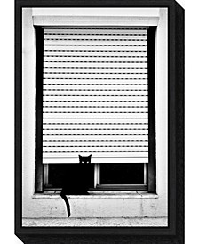 Curious Cat by Florentinus Joseph Canvas Framed Art
