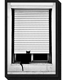 Amanti Art Curious Cat by Florentinus Joseph Canvas Framed Art