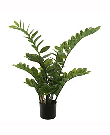 """36"""" Potted Green Zamifolia Bush X 9 With 166 Leaves"""