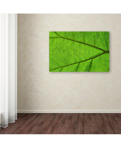 "Trademark Global Cora Niele 'Leaf Texture IV' Canvas Art, 30"" x 47"""