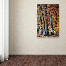 Cora Niele 'Autumn Beeches II' Canvas Art