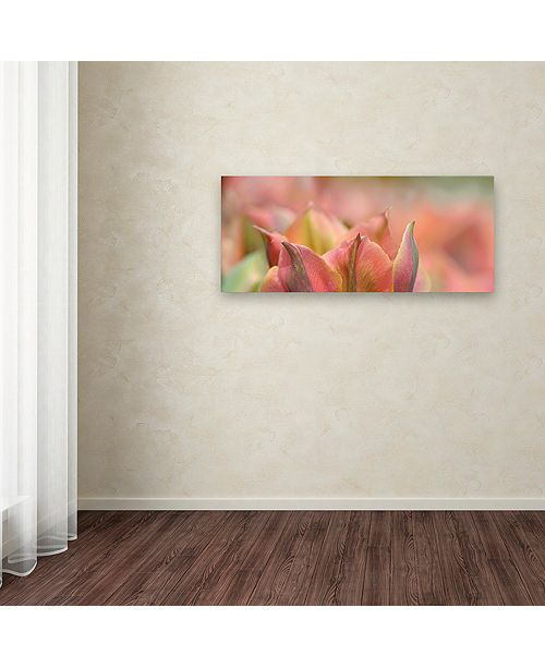 "Trademark Global Cora Niele 'Tulip 'Artist' Scape' Canvas Art, 20"" x 47"""