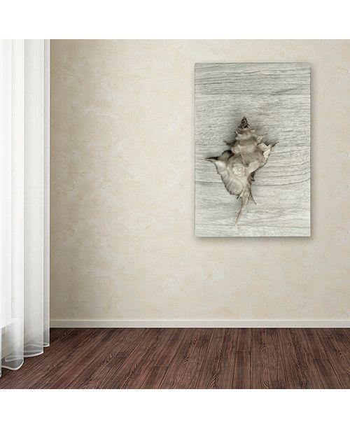 "Trademark Global Cora Niele 'Murex Shell' Canvas Art, 12"" x 19"""