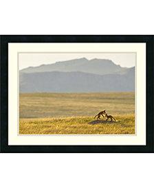 Amanti Art Montana Fox Kits  Framed Art Print