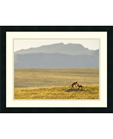 Amanti Art Montana Fox Kits  Framed Art Print