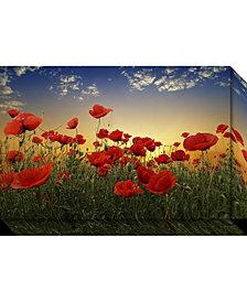 Amanti Art Poppies  Canvas Art Gallery Wrap