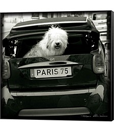Paris Dog I by Marc Olivier Canvas Art