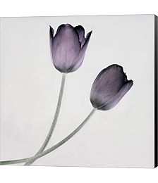 Tulip IV by Symposium Design Canvas Art