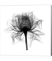 Rose,Open #2 X-Ray by Bert Myers Canvas Art