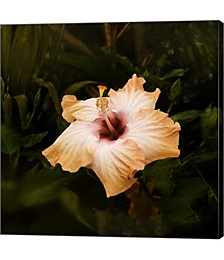 Perfect Hibiscus by Harold Silverman Canvas Art
