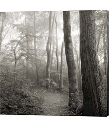 Woodland Path by Nicholas Bell Photography Canvas Art