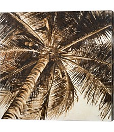 Coconut Palm II by Patricia Pinto Canvas Art