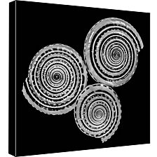Ptm Images,B&W Seashell Decorative Canvas Wall Art
