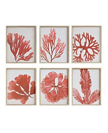 Coral Image Wood Framed Wall Décor, Set of 6