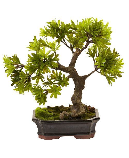 Nearly Natural Podocarpus w/Mossed Bonsai Planter