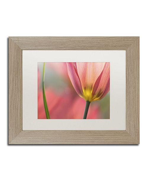 "Trademark Global Cora Niele 'Tulipa Planifolia' Matted Framed Art - 14"" x 11"" x 0.5"""