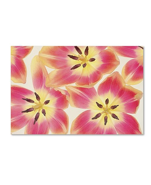"Trademark Global Cora Niele 'Cerise and Yellow Tulips' Canvas Art - 32"" x 22"" x 2"""