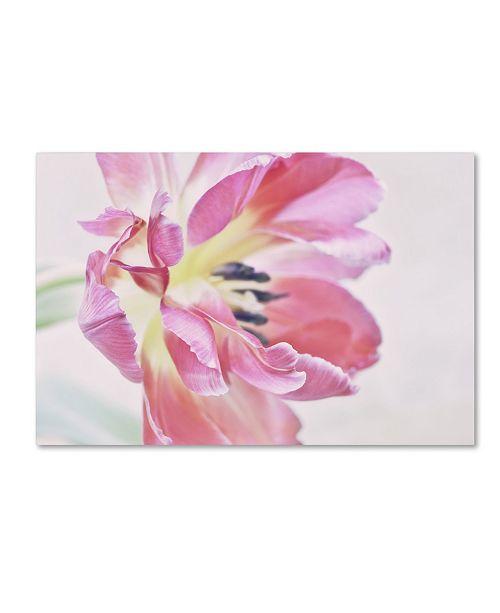 "Trademark Global Cora Niele 'Cerise Tulip' Canvas Art - 19"" x 12"" x 2"""