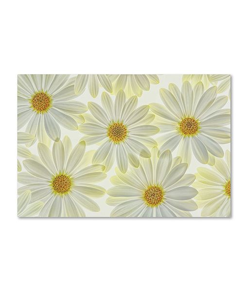 "Trademark Global Cora Niele 'Daisy Flowers' Canvas Art - 32"" x 22"" x 2"""