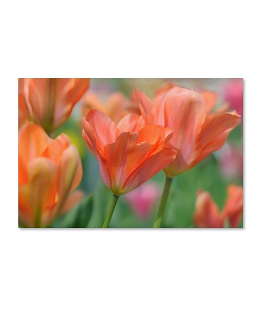 "Trademark Global Cora Niele 'Tulip Flower Orange Wings' Canvas Art - 24"" x 16"" x 2"""