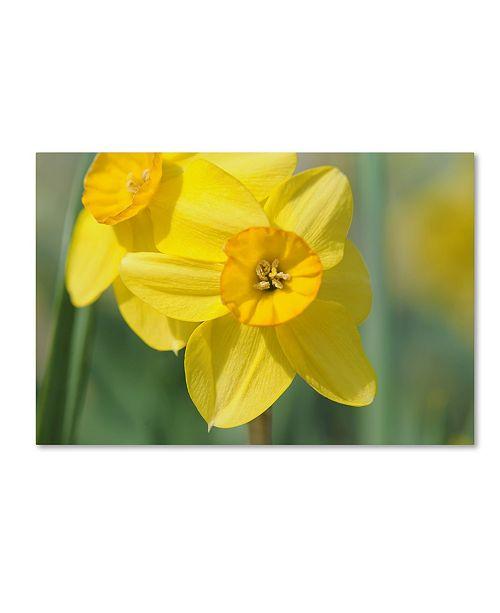 "Trademark Global Cora Niele 'Yellow Daffodils' Canvas Art - 47"" x 30"" x 2"""