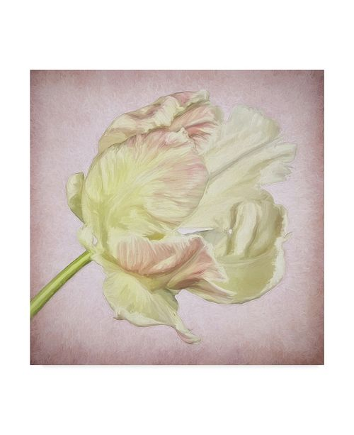 "Trademark Global Cora Niele 'Pink Parrot Tulip Painting Iii' Canvas Art - 14"" x 14"" x 2"""