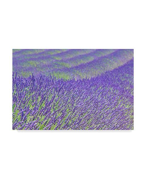 "Trademark Global Cora Niele 'Lavender' Canvas Art - 19"" x 12"" x 2"""