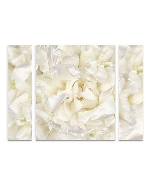 "Trademark Global Cora Niele 'White Peony Flower' Multi Panel Art Set Large - 30"" x 41"" x 2"""