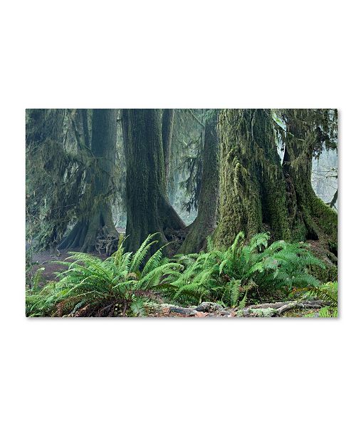 "Trademark Global Mike Jones Photo 'Washington Olympic NP Foggy Ferns' Canvas Art - 24"" x 16"" x 2"""