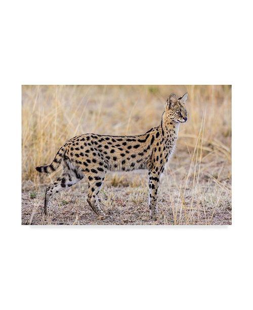 "Trademark Global Jeffrey C Sink 'Serval Hunting' Canvas Art - 47"" x 2"" x 30"""
