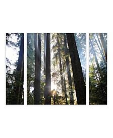 """Pierre Leclerc 'Sunrays' Multi Panel Art Set Large 3 Piece - 44"""" x 34"""" x 2"""""""